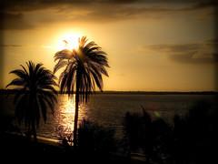 Fiji Dreaming (PA; ashlee) Tags: ocean trees sunset beach fiji dream palm