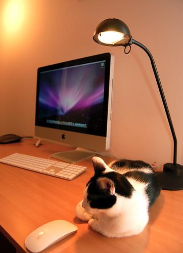 cat_and_iMac