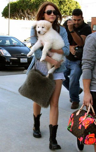 miley-cyrus-puppy-new (3)