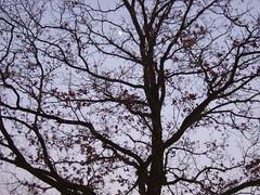Baumkrone im Winter (feuermelder2009) Tags: winter oldenburg wildenloh
