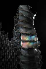 Iridescence Of Shed Snakeskin 6 (Sea Moon) Tags: colors rainbow spectrum reptile snake scales transparent grating diffraction shedded bellyscales