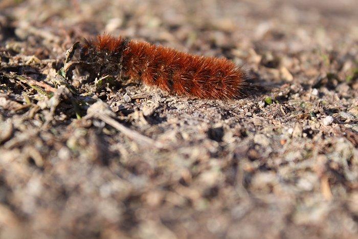 01-27-caterpillar