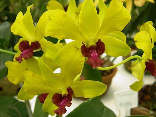 orquidea 19