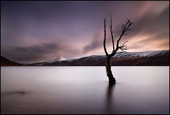 Loch Rannoch (angus clyne) Tags: world trees light sunset red wild mountain snow cold art beach nature wet clouds dead grey one coast scotland photo moving highlands high interesting europe branch slow flood snowy bare hill perthshire deep fast peak windy hills explore fairy photograph bark shore single only lone dreamy lonely wilderness spiritual moor dying magical drown alder drift fascinating flooded lochrannoch flikcr tummel schiehallion specialpicture leefilters colorphotoaward thesecretlifeoftrees winterspingatumnfall cloudcloudysky peregrino27newvision