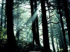rytas (Ole567) Tags: gamta miškas medžiai gėlės