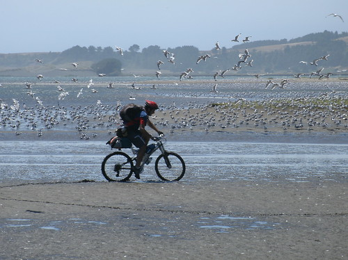 sand biking