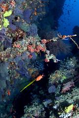 The Palette (Lea's UW Photography) Tags: underwater maldives fins corals malediven unterwasser korallen tokina1017mm leamoser