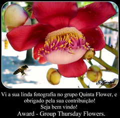 Grupo Quinta Flower