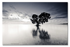 Bullet with Butterfly Wings ([ Kane ]) Tags: ocean city morning trees sea sky white black reflection tree nature water lines clouds butterfly dawn early day glow shapes brisbane mangrove qld queensland kane shape tones gledhill 50d beachmere kanegledhill kanegledhillphotography