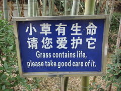 Grass contains life (EpicFireworks) Tags: china fireworks firework pyro liuyang epicfireworks