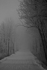 Would I lead you astray? (Jeana Marie Photography) Tags: morning travel trees bw white snow black nature minnesota fog dark landscape frost path walk branches grain hike trail february 2010