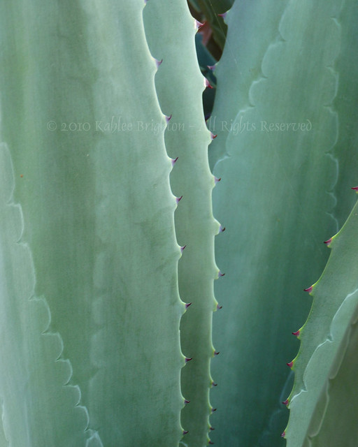 Agave Abstract I