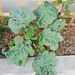 broccoli 23.02.10