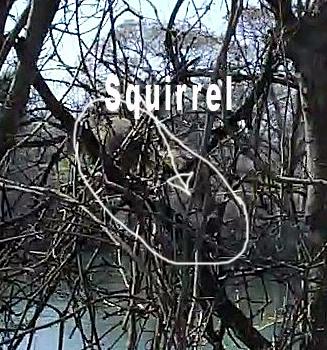 Squirrel-pic1