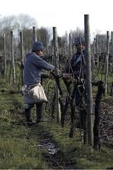 Chile: Pérdidas del sector viñatero alcanzarían US$ 600 millones