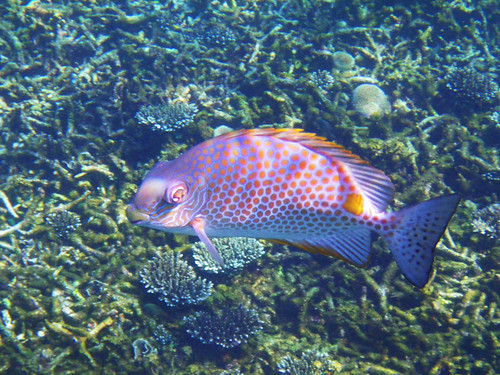 Underwater Ko Tao - Ko Nang Yuan - Thailande