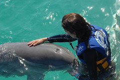 dolphin training (ABC Dolphin Trainer Academy) Tags: dolphin manatee cancun trainer islamujeres trainingsession dolphindiscovery animaltraining dolphintrainer positivereinforcementtraining entrenamientorefuerzopositiva entrenadordedelfines