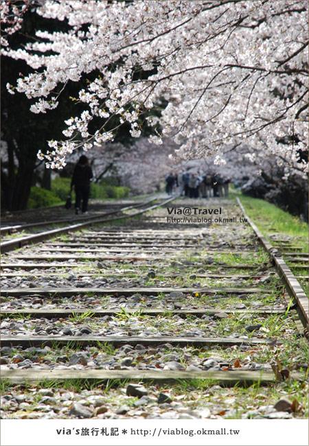 【via京都賞櫻行】鐵道上的櫻花美景~蹴上鐵道13