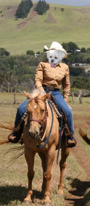 Dory-on-horseback