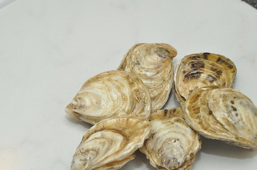Kushi oyster