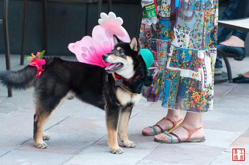 狗选美 | flickr – 相片分享!