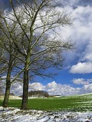 New Beginnings - Last day of winter , first day of Spring (janusz l) Tags: new blue trees winter sky snow verde green primavera field clouds geotagged spring poland lastday firstday neve campo fields beginnings janusz boleslawiec leszczynski mywinners geo:lat=51153724 geo:lon=15432014 215400