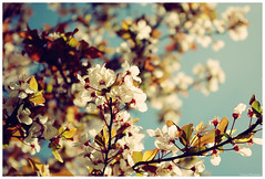 The warm of the spring (RL Stars) Tags: madrid flowers flores tree primavera arbol spring spain cross pentax process photoart vallecas cruzado proceso k200d rlstars