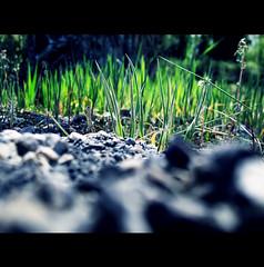 """THIS IS A """"PSYCO DWARFS"""" WORDL BUT WOULD BE NOTHING WITHOUT A SMURF GAZE - QUESTO E' UN MONDO DI PSYCO NANI MA NON SAREBBE NULLA SENZA LO SGUARDO DI UN PUFFO (Elena Fedeli) Tags: italy blur green grass river dof bokeh fiume campagna erba land rocce prato marche jesi sfuocato itakia esino canonpowershotg10 canong10 scarsaprofonditdicampo moreggio shortdephtoffield smurfsgaze"""