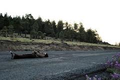 Suicida (Mariano Rupérez) Tags: girl grancanaria chica carretera campo montaña destino suicida cumbre