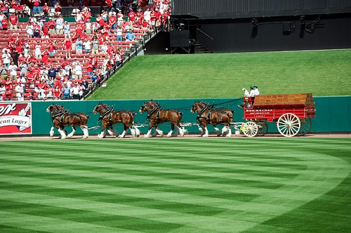 The Clydesdales