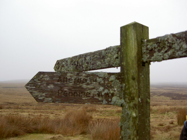 Lichen covered signpost