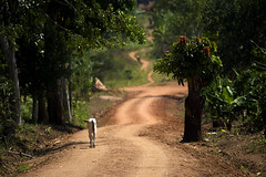 """DSC_5628_road_to_janes_school • <a style=""""font-size:0.8em;"""" href=""""http://www.flickr.com/photos/35665144@N00/4537234423/"""" target=""""_blank"""">View on Flickr</a>"""