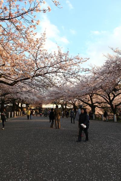粉紅東京152