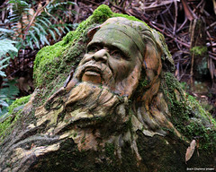 William Ricketts Sanctuary - Olinda, Dandenong Ranges, Victoria. (Black Diamond Images) Tags: sculpture tourism australia melbourne victoria yarravalley dandenong ranges ferns aboriginal aboriginalart olinda dandenongs dandenongranges williamricketts treeferns dicksoniaantarctica eucalyptusregnans bdi aboriginalsculpture australiangarden tourismvictoria williamrickettssanctuary beautifulgardens cyatheaaustralis blackdiamondimages greatgardens australiangardens magnificentgardens indigenoussculpture victoriantourism australianaboriginalsculpture bestgardens