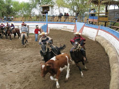 Rodeo Rapel IMG_5472
