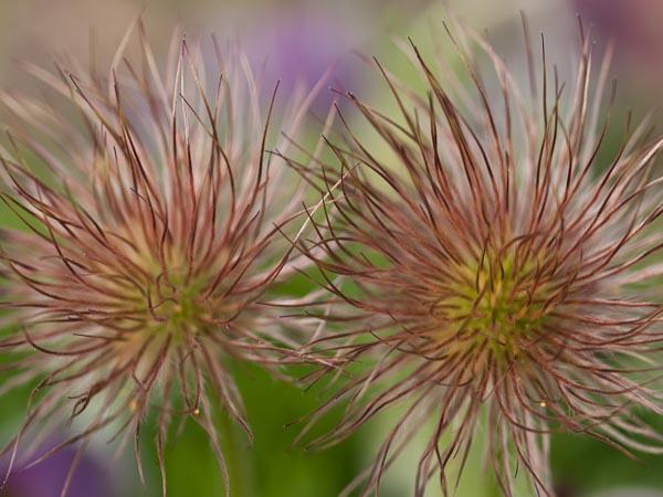 Wild Hair Flower