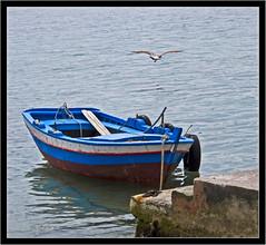 qui. (_esse_) Tags: sea barca mare ship gull sicily pace palermo sicilia gabbiano mondello proprioqui