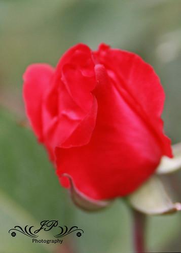 Flower05  4-23-10