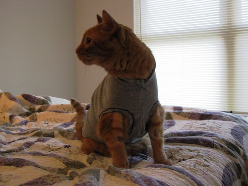 The shirt model