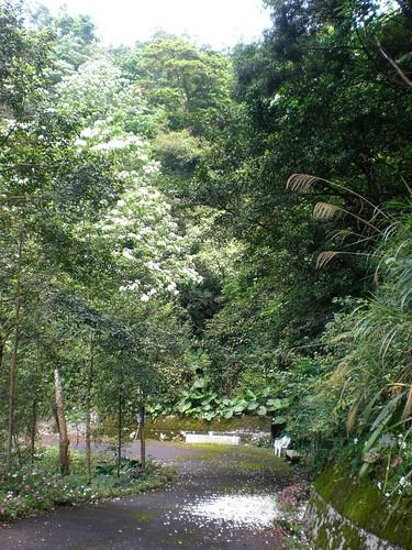 Tung Tree