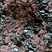 Rock365 : 02 05 2010 : Rhodonite and magnetite
