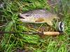 """Pêche de la truite à la mouche dans les Pyrénées © Lionel ARMAND • <a style=""""font-size:0.8em;"""" href=""""http://www.flickr.com/photos/49881551@N02/4583144369/"""" target=""""_blank"""">View on Flickr</a>"""