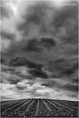 Profumo Di Pioggia, Ignago (VI) - Smell Of Rain, Italy (Enrico Grotto) Tags: sky bw rain landscape italia nuvole bn mais cielo campo nikkor acqua pioggia luce paesaggio collina vanguard vicenza 1224 temporale nubi d40 cluod grottoenrico ignago