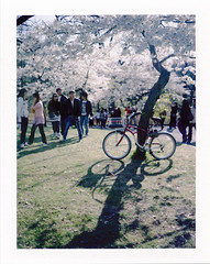 .. (Jösé) Tags: toronto tree polaroid highpark fuji shadows crowd cherryblossom parked bycicle fp100c epsonv700 roidweek landcamera250 roidweek2010