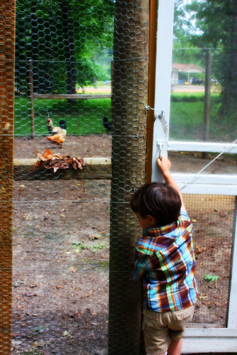 Levi at the Chicken Coop