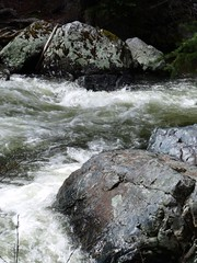 The chilly waters of the North Fork start in the mountains above Granite, OR and join the John Day River near Dayville, OR