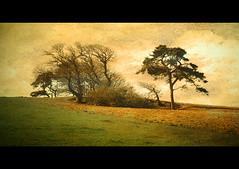 Varied Trees
