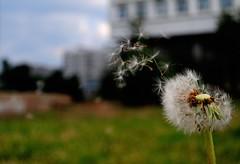 Breeze of Spring (Ozrix) Tags: life macro green field spring nikon scenery bokeh small micro pollen dslr breeze depth d3000