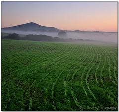 Misty Morning Metamorphosis (Panorama Paul) Tags: sunrise wheat seedlings durbanville nohdr sigmalenses nikfilters vertorama nikond300 wwwpaulbruinscoza paulbruinsphotography
