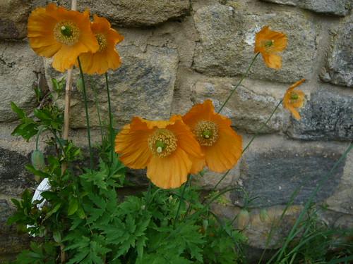 juneflowers